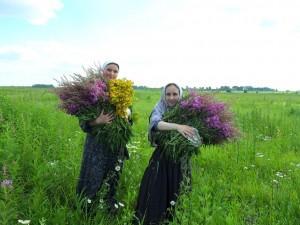 Сбор лекарственных растений,Макариев-Решемский женский монастырь